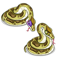 Set of two mesh pythons one evil another sick vector