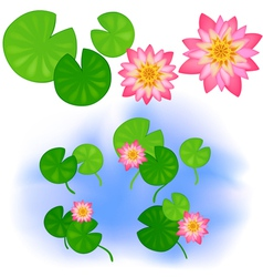 Lotus with leaves vector