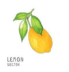 Lemon tree branch watercolor painting on white vector