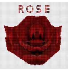Screw design - rose vector image vector image