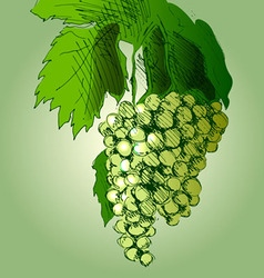 Colored hand sketch grapes vector