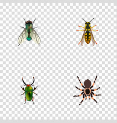 Realistic insect housefly tarantula and other vector