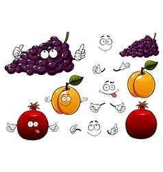 Grape apricot and pomegranate fruits vector