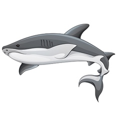 Generic shark vector