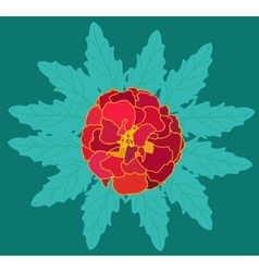 Beautiful Blooming Flower Tagetes with Green vector image