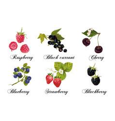 Relistic berries set vector
