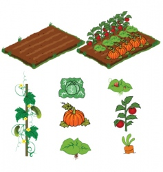 Farm vegetables vector