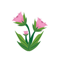 peony flower spring image vector image