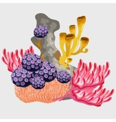 Underwater coral and other microorganisms vector