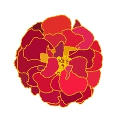 Beautiful Blooming Flower Tagetes on White vector image vector image