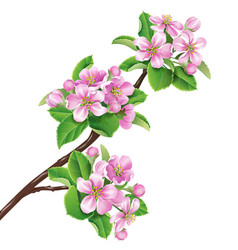 flowering branch1 vector image vector image