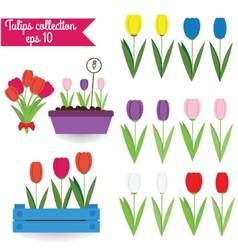 Tulips clipart collection vector