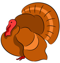 Turkey bird vector