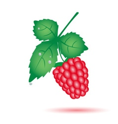 Colorful raspberry summer fruit with leaf eps10 vector