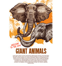 african animals elephants zoo poster vector image vector image