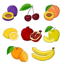 Set of fresh fruits vector image
