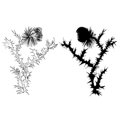 Drawing thistle vector