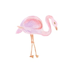 Watercolor painted of flamingo vector image vector image