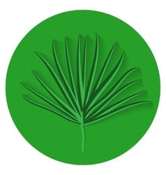 Green Palm Leaf on White Background vector image
