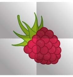 fruit icon design vector image