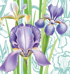 Seamless floral pattern with irises vector