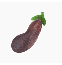 Watercolor eggplant hand-drawn object isolated on vector