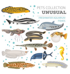 Unusual freshwater aquarium fish breeds icon set vector