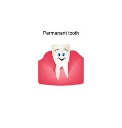 Permanent teeth in the gums children cartoon vector