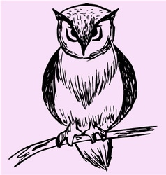 Owl tree branch vector