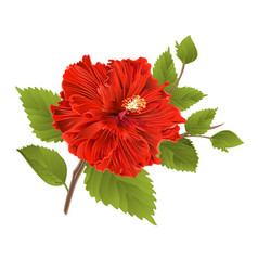 Red hibiscus stem tropical flower vector