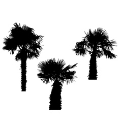 Isolated silhouette of palm trees on white vector