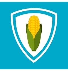 Corn vegetable isolated icon vector