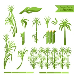 Sugar cane decoration elements vector