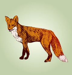 Colored hand sketch fox vector