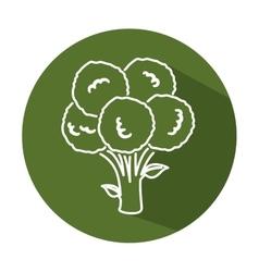 Broccoli vegetable fresh isolated icon vector