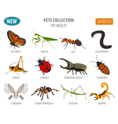 pet insects breeds icon set flat style isolated vector image