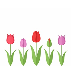 Tulip Set vector image