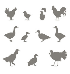 Farm animals silhouettes of chickens vector