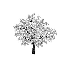 tree with leaves summer nature sign floral vector image vector image