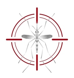 Fever mosquito species aedes aegyti in red aim vector