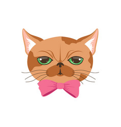 cute cat in pink bow tie funny cartoon animal vector image