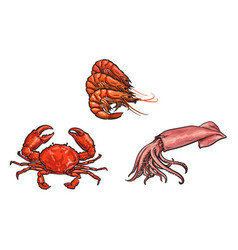Sketch lobster crab squid set isolated vector