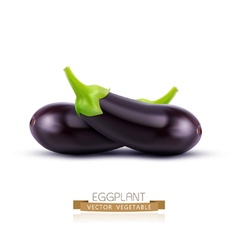 Eggplant isolated on white background vector