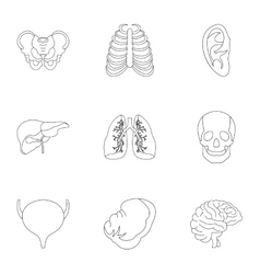 Internal organs icons set outline style vector