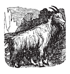 Mountain goat vintage vector