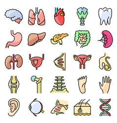 Icons set with human organs vector