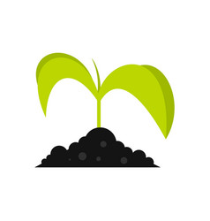 green seedling in soil icon flat style vector image