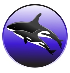 killer whale swim in the ocean with a baby vector image
