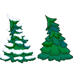 Conifer tree isolated vector