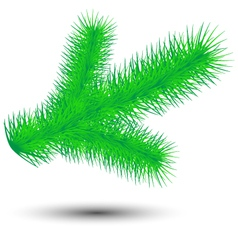 Conifer twig vector